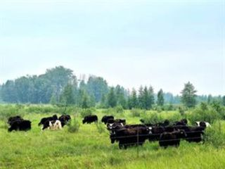 Main Photo: ON Range Road 6-0: Rural Clearwater County Agriculture for sale : MLS®# A1132841