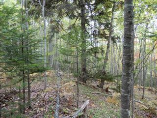 Photo 15: Tanner Hill Road in Limerock: 108-Rural Pictou County Vacant Land for sale (Northern Region)  : MLS®# 202020165