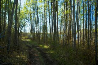Photo 10: RR 21 TWP 565A Lake Nakamun: Rural Lac Ste. Anne County Rural Land/Vacant Lot for sale : MLS®# E4246330