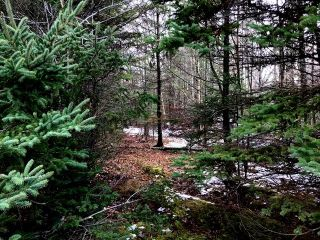 Photo 7: LOT 100ABC WEST PETPESWICK Road in West Petpeswick: 35-Halifax County East Vacant Land for sale (Halifax-Dartmouth)  : MLS®# 5158270