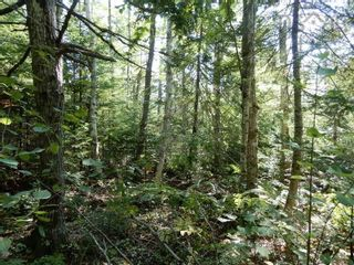 Photo 3: Watt Road in Hedgeville: 108-Rural Pictou County Vacant Land for sale (Northern Region)  : MLS®# 202122216