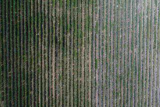 Photo 26: 16397 40 Avenue in Surrey: Serpentine Land for sale (Cloverdale)  : MLS®# R2586709