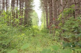 Photo 5: Lt 2 Hwy 121 in Kawartha Lakes: Rural Somerville Property for sale : MLS®# X2986227