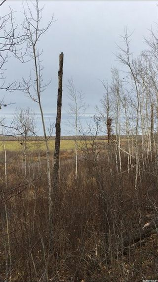 Photo 8: Acreage-Adjacent to South Bay-Turtle Lake in Turtle Lake: Lot/Land for sale : MLS®# SK858441