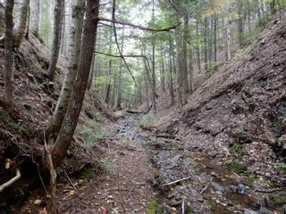 Photo 17: Tanner Hill Road in Limerock: 108-Rural Pictou County Vacant Land for sale (Northern Region)  : MLS®# 202121301