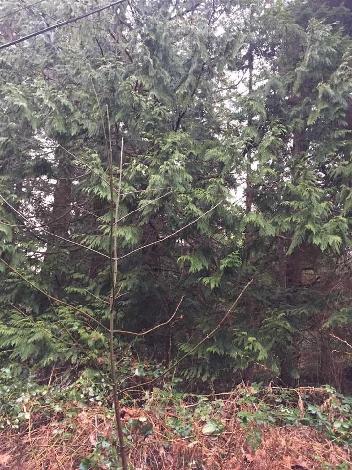 Photo 9: Photos: LOT D HEAL Road: Roberts Creek Land for sale (Sunshine Coast)  : MLS®# R2149518