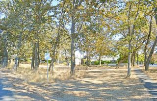 Photo 13: 1464 Bromley Pl in VICTORIA: SE Cedar Hill Land for sale (Saanich East)  : MLS®# 809481