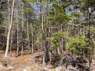 Photo 8: 65 Eaglet Lane in Musquodoboit Harbour: 35-Halifax County East Vacant Land for sale (Halifax-Dartmouth)  : MLS®# 202109854