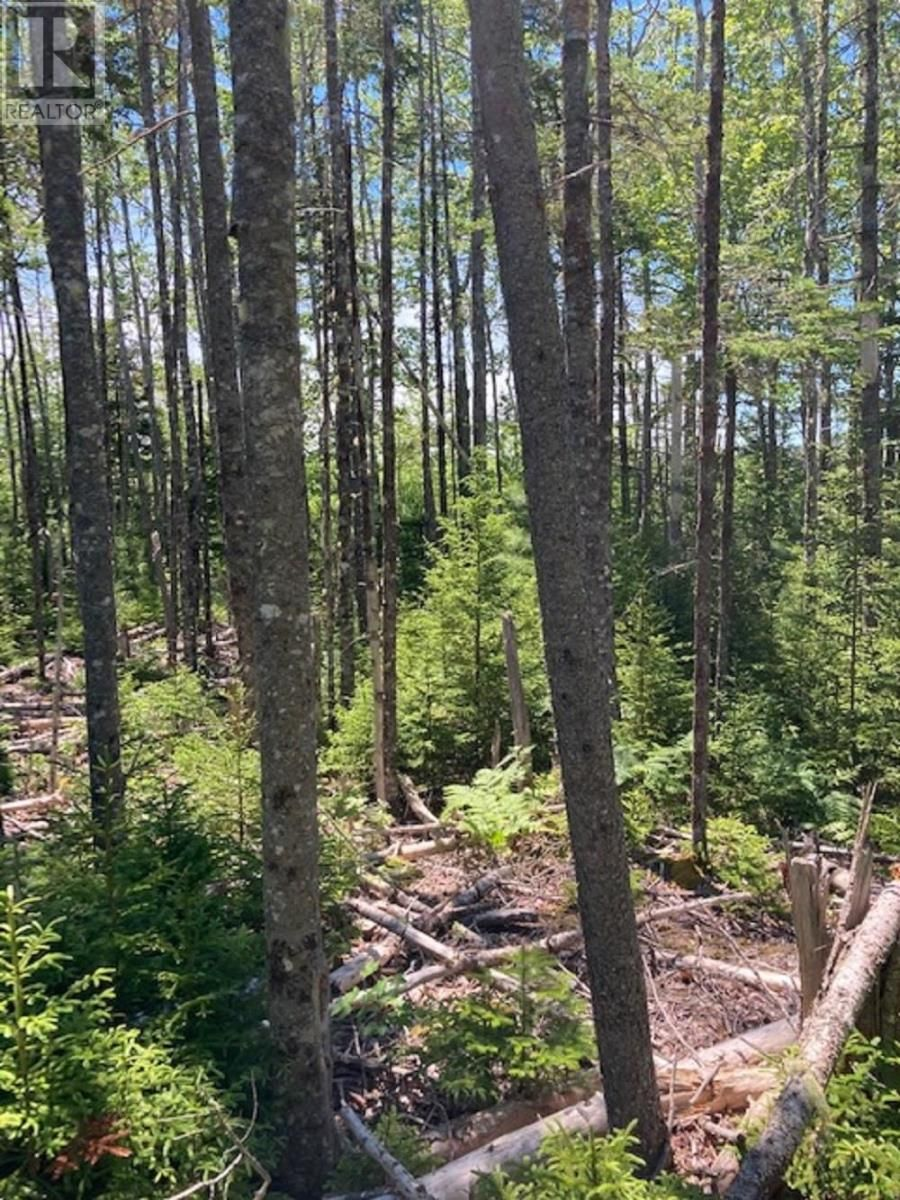 Main Photo: Lot Hirtle Road in Voglers Cove: Vacant Land for sale : MLS®# 202116540