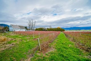 Photo 29: 35826 SOUTH PARALLEL Road in Abbotsford: Sumas Prairie Agri-Business for sale : MLS®# C8035413