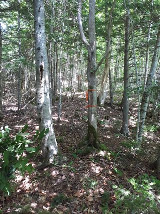 Photo 14: Meiklefield Road in Meiklefield: 108-Rural Pictou County Vacant Land for sale (Northern Region)  : MLS®# 202117504