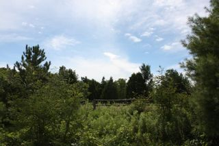 Photo 5: 11358 County Road 2 Rd in Grafton: Land Only for sale : MLS®# 511350277