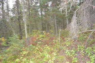 """Photo 12: Lot 8 GLACIER VIEW Road in Smithers: Smithers - Rural Land for sale in """"Silvern Estates"""" (Smithers And Area (Zone 54))  : MLS®# R2410914"""