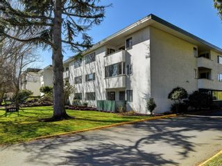 Photo 1: 305 3880 Shelbourne St in : SE Cedar Hill Condo for sale (Saanich East)  : MLS®# 872259