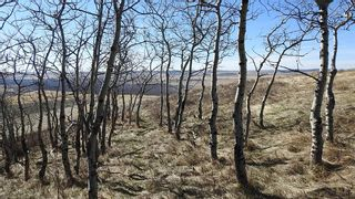 Photo 10: SW 36-20-3W5: Rural Foothills County Residential Land for sale : MLS®# A1101413