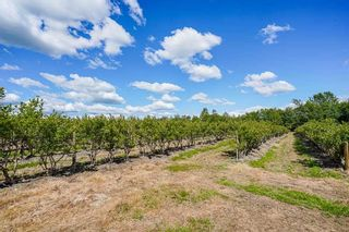 Photo 20: 21.44AC 240 STREET in Langley: Langley City Agri-Business for sale : MLS®# C8038637