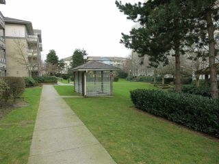 """Photo 18: 316 4990 MCGEER Street in Vancouver: Collingwood VE Condo for sale in """"CONNAUGHT"""" (Vancouver East)  : MLS®# R2141317"""