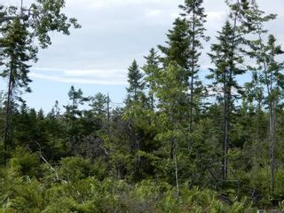 Photo 4: Battist Road in Sundridge: 108-Rural Pictou County Vacant Land for sale (Northern Region)  : MLS®# 202119320