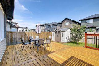 Photo 28: 113 Saddlelake Green NE in Calgary: Saddle Ridge Detached for sale : MLS®# A1127536