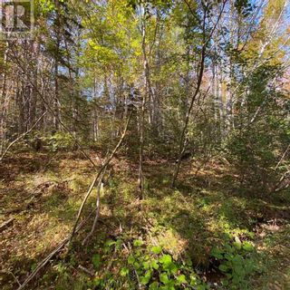 Photo 8: Acreage Middle New Cornwall in Middle New Cornwall: Vacant Land for sale : MLS®# 202125307