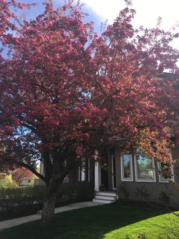Photo 35: Photos: 2804 36 Street SW in Calgary: Killarney/Glengarry Semi Detached for sale : MLS®# A1058025