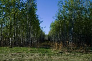 Photo 26: RR 21 TWP 565A Lake Nakamun: Rural Lac Ste. Anne County Rural Land/Vacant Lot for sale : MLS®# E4246330