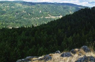 Photo 5: 1028 Finlayson Arm Rd in Langford: La Goldstream Land for sale : MLS®# 746085