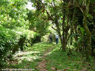 Photo 11: Oceanview land for sale near Portobelo