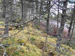 Photo 1: 1985 Ostrea Lake Road in Ostrea Lake: 35-Halifax County East Vacant Land for sale (Halifax-Dartmouth)  : MLS®# 202106036