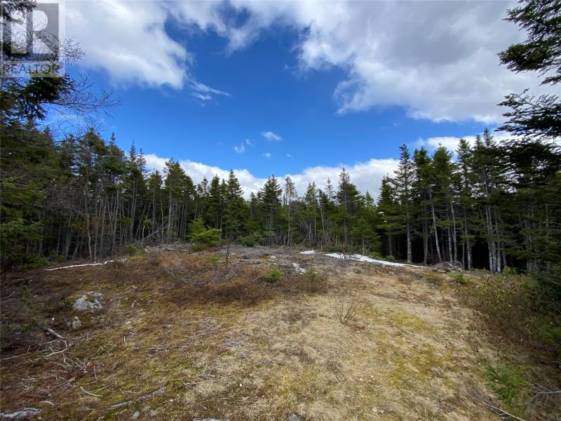 FEATURED LISTING: 0 New World Island Forestry Access Road Summerford