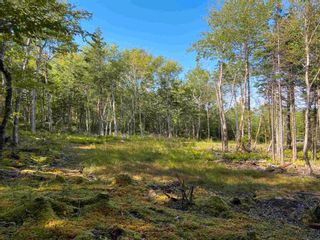 Photo 1: Lot 35 Wall Street in Cape George: 305-Richmond County / St. Peters & Area Vacant Land for sale (Highland Region)  : MLS®# 202123287
