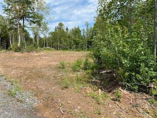 Photo 3: 3821 White Hill Road in White Hill: 108-Rural Pictou County Residential for sale (Northern Region)  : MLS®# 202120961
