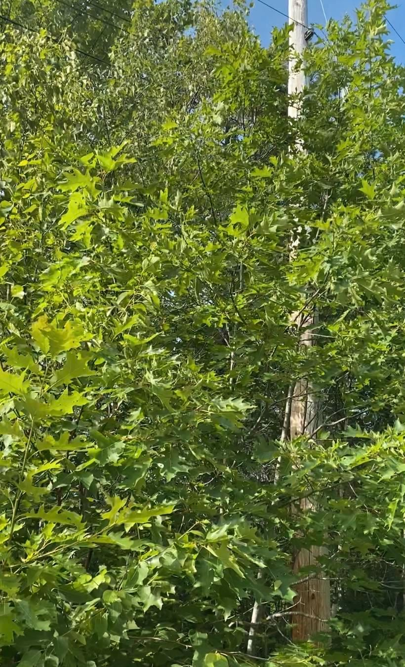 Photo 8: Photos: Lot 5 Mersey Road in East River: 405-Lunenburg County Vacant Land for sale (South Shore)  : MLS®# 202117014