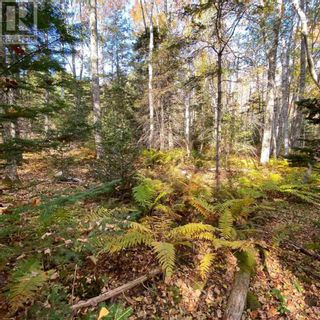Photo 7: Acreage Middle New Cornwall in Middle New Cornwall: Vacant Land for sale : MLS®# 202125307