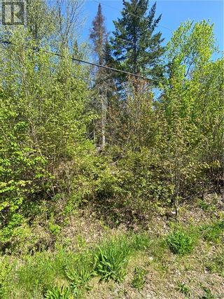 Photo 6: 5264 Rte 770 in Rollingdam: Vacant Land for sale : MLS®# NB058269