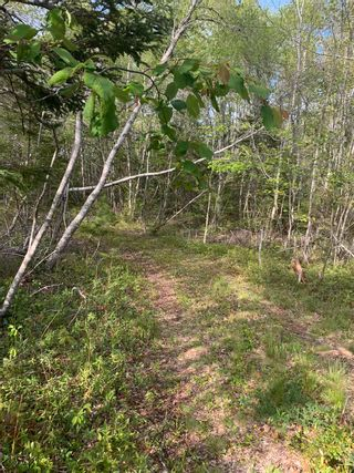 Photo 6: Lot Sandy Point Road in Jordan Ferry: 407-Shelburne County Vacant Land for sale (South Shore)  : MLS®# 202113639