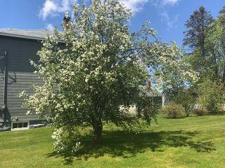 Photo 4: 9 Terrace Street in Amherst: 101-Amherst,Brookdale,Warren Residential for sale (Northern Region)  : MLS®# 202105861