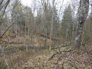 Photo 5: Highway 4 in Salt Springs: 108-Rural Pictou County Vacant Land for sale (Northern Region)  : MLS®# 202111268