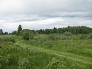 Photo 3: 12 KMS NORTH ON COCHRANE in COCHRANE: Rural Rocky View MD Rural Land for sale : MLS®# C3526638