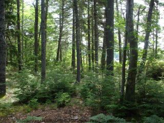 Photo 14: Lot 11 RAFUSE POINT Road in Pleasantville: 405-Lunenburg County Vacant Land for sale (South Shore)  : MLS®# 202122075