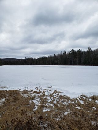 Photo 2: Lots Melrose Country Harbour Road in Country Harbour: 303-Guysborough County Vacant Land for sale (Highland Region)  : MLS®# 202102147
