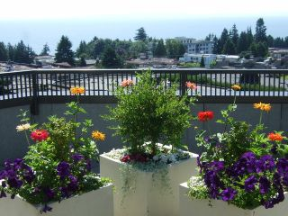 "Photo 13: 204 1480 FOSTER Street: White Rock Condo for sale in ""WHITE ROCK SQUARE 1"" (South Surrey White Rock)  : MLS®# F1401330"