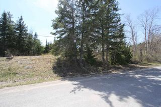 Photo 9: 259 County Rd 41 Road in Kawartha Lakes: Rural Bexley Property for sale : MLS®# X5210398