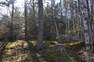 Photo 4: Lot Ridge Road in Hillgrove: 401-Digby County Vacant Land for sale (Annapolis Valley)  : MLS®# 202108522