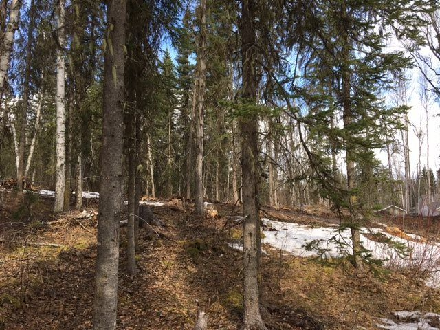 Photo 3: Photos: LOT 1 MARSH Road in Quesnel: Quesnel - Rural West Land for sale (Quesnel (Zone 28))  : MLS®# R2560822