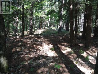 Photo 22: 400 MARY LAKE (GRYFFIN BLUFFS LANE) Lane in Port Sydney: Vacant Land for sale : MLS®# 40126538