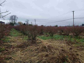 Photo 16: Blueberry Farm FORD RD, Pitt Meadows in Pitt Meadows: West Meadows House for sale : MLS®# R2519795