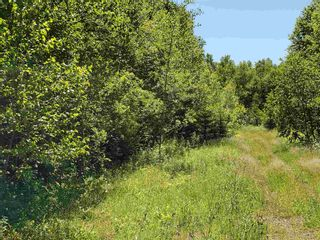 Photo 6: 8 Shady Lane in Loch Broom: 108-Rural Pictou County Vacant Land for sale (Northern Region)  : MLS®# 202117520