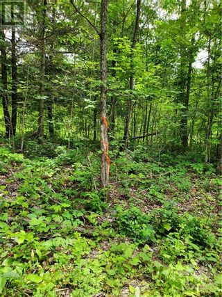 Photo 18: 2600 CLYDE LAKE ROAD in Lanark: Vacant Land for sale : MLS®# 1253879
