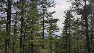 "Photo 21: Lot 49 FLINT Road: Keats Island Land for sale in ""10 Acres"" (Sunshine Coast)  : MLS®# R2460996"